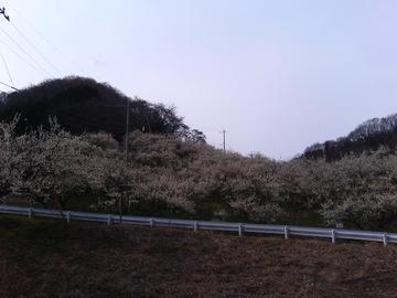 Siroyamakoume